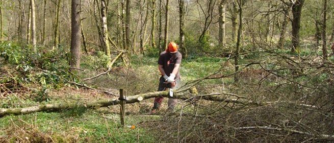 Felling small trees training